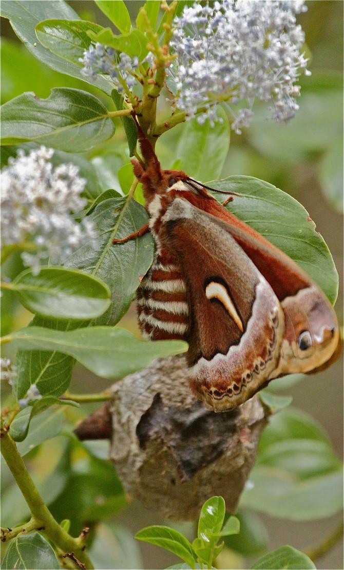 Moths & Bushtits. Spring at Berkeley's Botanical Gardens