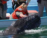 Gray whale encounter