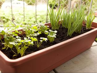 Horta em casa - A Jardineira
