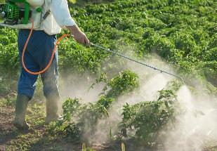 Agrotóxicos: E Agora?