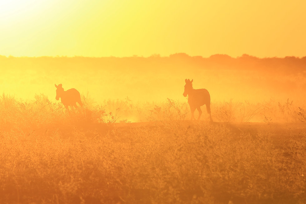 Synopsis Cries of the Savanna. An adventure. A journey to understanding African wildlife conservatio