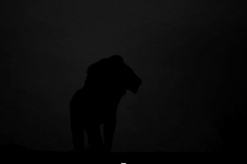 lion%2520at%2520night%2520%2540johan_van