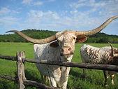 Farm & Ranch Loans