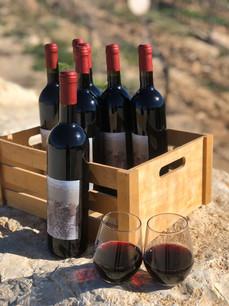 יין בקבובקים.jpeg
