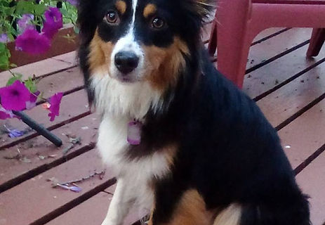 Impression dog's - Reba