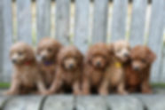 Magical litter 7w3.jpg