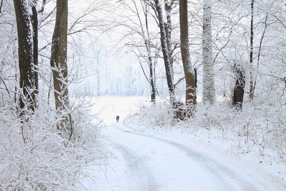 Sibby woods.jpg