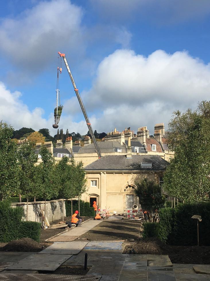 craning semi-mature trees onto site