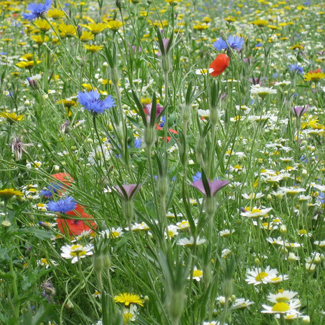 Wildflower Meadow 2.jpg