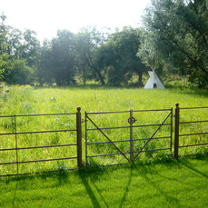Wildflower Meadow 1.JPG