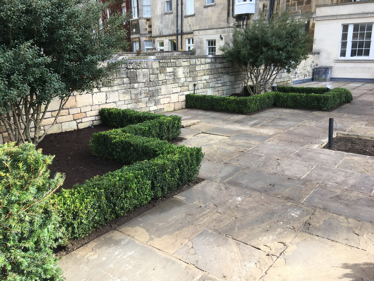 instant Buxus sempervirens clipped hedge to frame a parterre