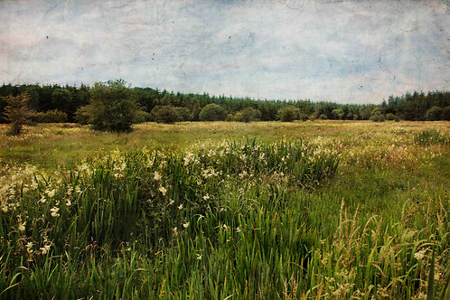 Meadowsweet.