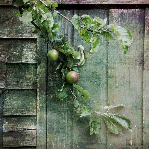 Summer fruits .