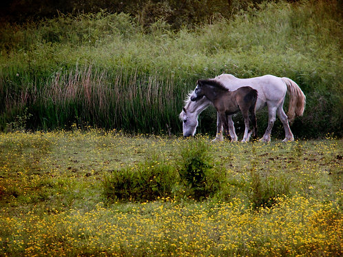 Down in the meadow ...