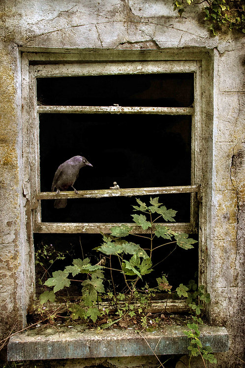 The jackdaw in the window.