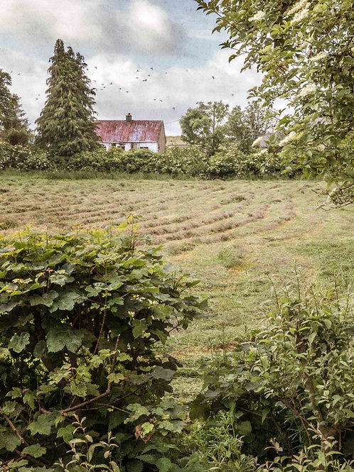The cottage beyond the field.