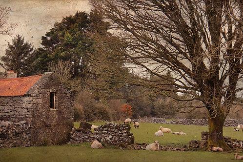 Sheep farm.
