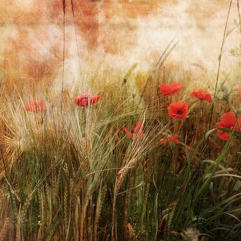 Among poppies ...
