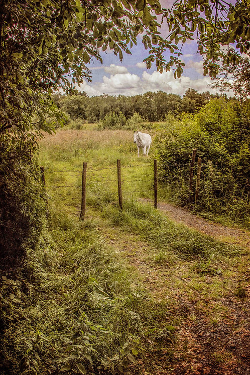 In the field with the white horse.