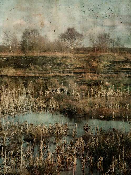 Across the marshland ...
