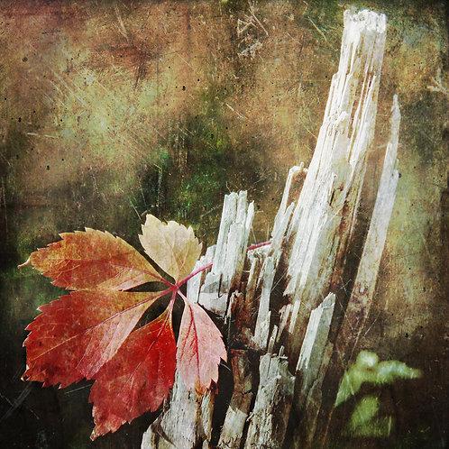 Red leaf ...