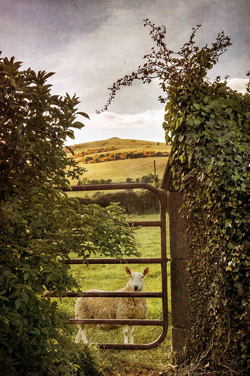 Behind the gate.