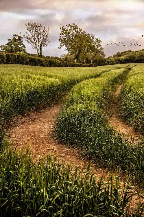 Across the green field.