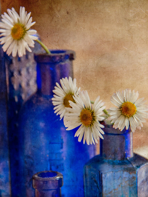 Daisies and blue.