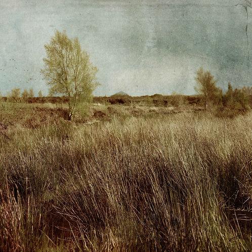 Marshland.