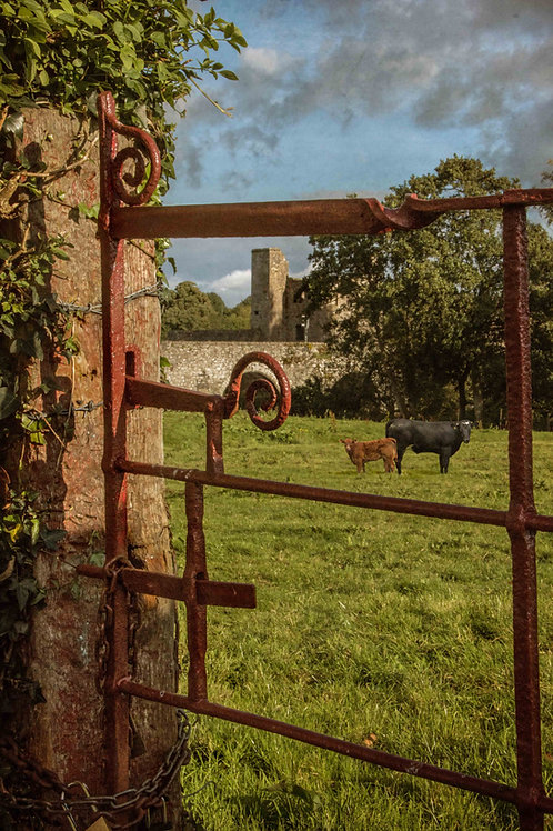 Through the red gate at evening.