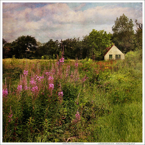 Where the willowherb grows ... Limited Edition print.