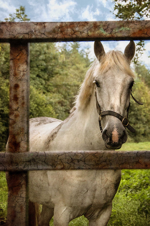 The white horse at the gate.