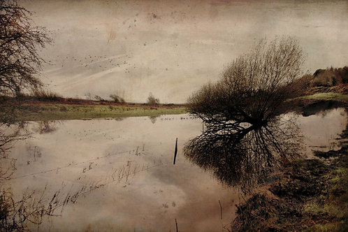 The flooded field.