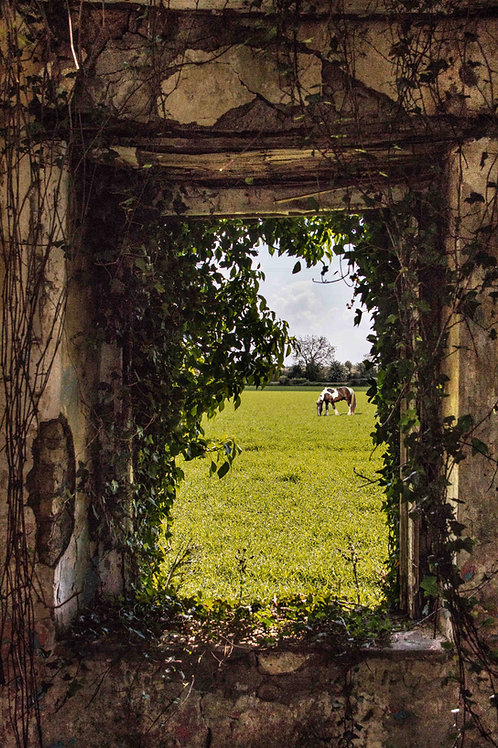 The horse through the window.
