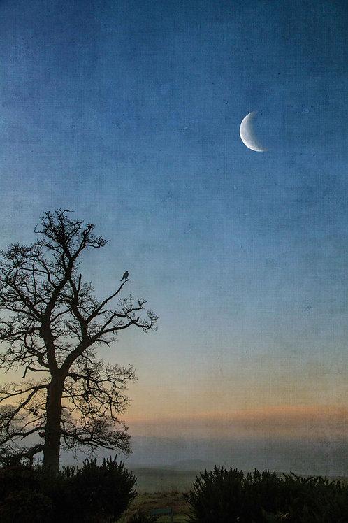 Under a crescent moon.