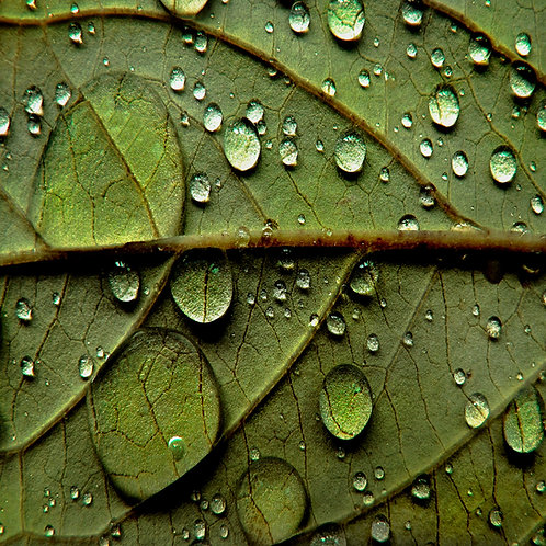 Droplets on green.