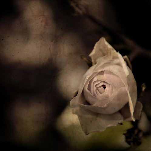 In the softness of evening ...