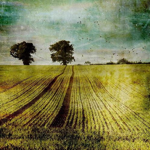 The autumn field.