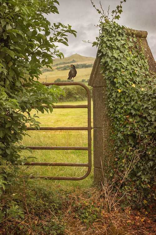 Beyond the gate ....