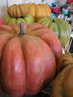 pumpkins 008.jpg