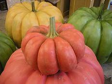 pumpkins hp3 002.jpg
