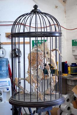 room requirments skeleton hp6.jpg