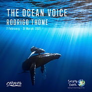 Rodrigo Thome, The Ocean Voice