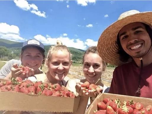 The Week of Strawberries