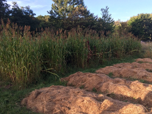 Frost Alert, Cover Crops, and Tucking Beds in for the Winter