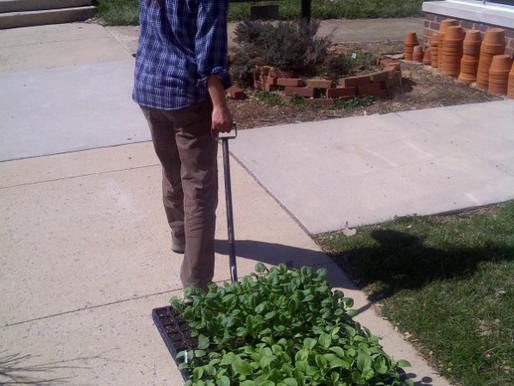 Harden Off Yer Plants