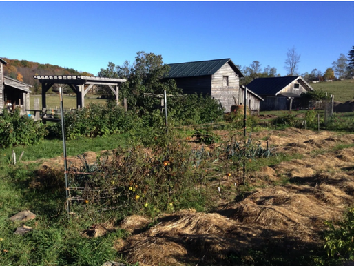 The Journey of Starting a Farm