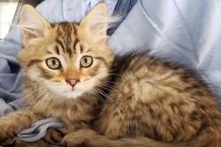 Bills Cat