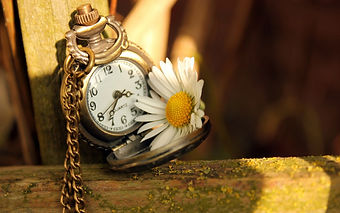 clock-time-daisy-flower-hd-wallpaper.jpg