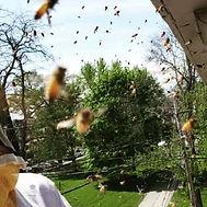 honey bee mad.jpg